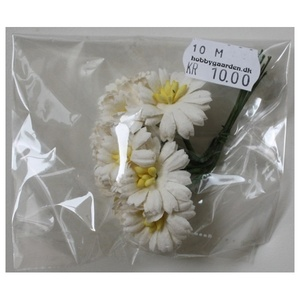Asters - Ivory 25 mm 10 stk