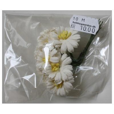 Asters - Ivory 25 mm 10 stk