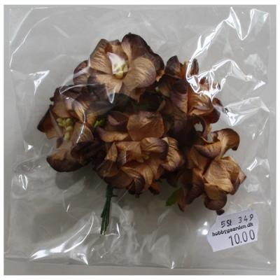 Gardenia Chocolate - 35 - 40 mm - 5 stk