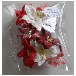 Liljer - Rød/hvid mix - 30 mm - 10 stk