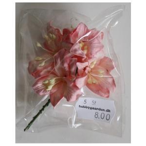 Liljer - Lys Pink 35 - 40 mm 5 stk